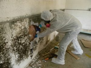 Mold-Removal-Remediation-project-in-Blacktown